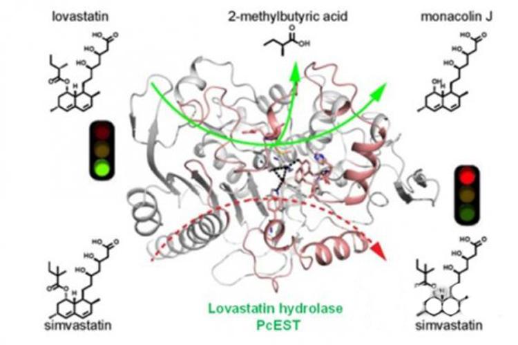揭示洛伐他汀水解酶催化机制-fudajzx.com北纳标物网