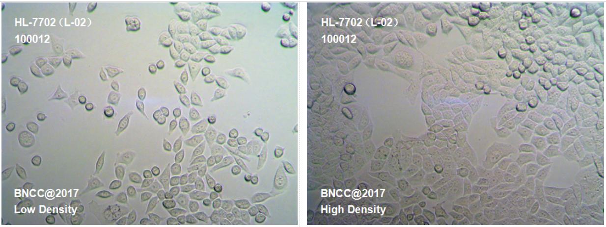 人正常肝细胞-实验细胞-标准物质网