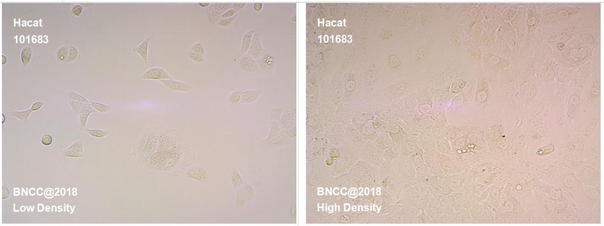 人永生化表皮细胞-实验细胞-标准物质网
