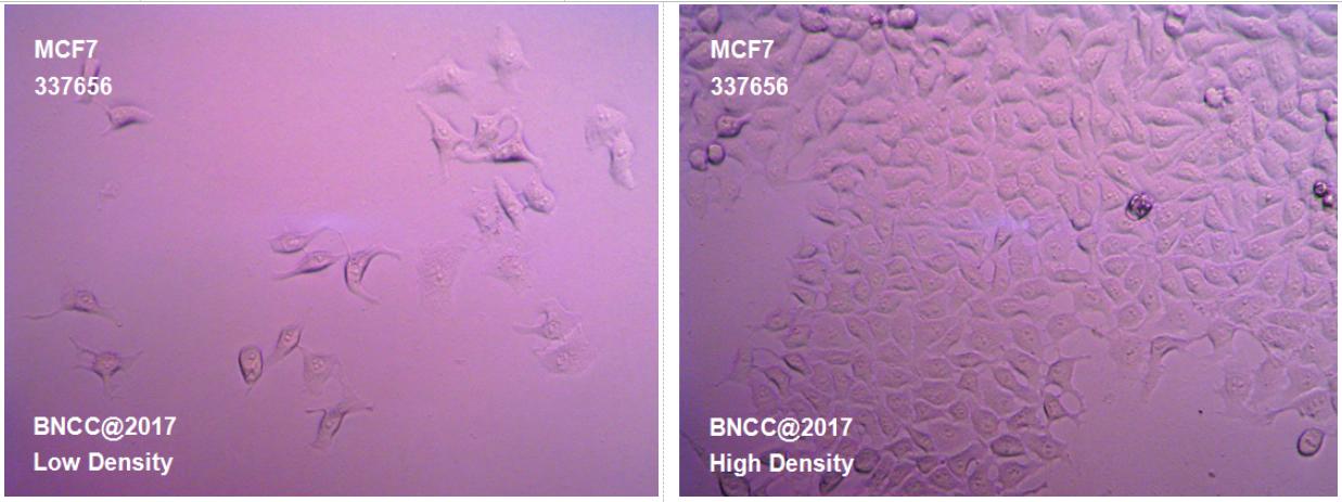 人乳腺癌细胞-实验细胞-标准物质网