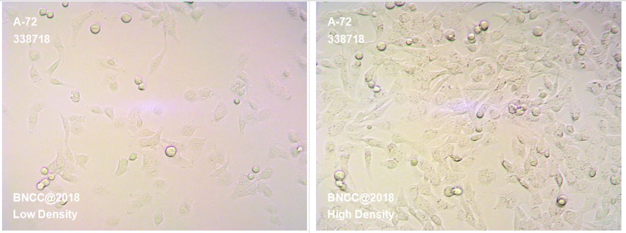 犬癌细胞-肿瘤细胞-BNCC细胞库-细胞菌种网