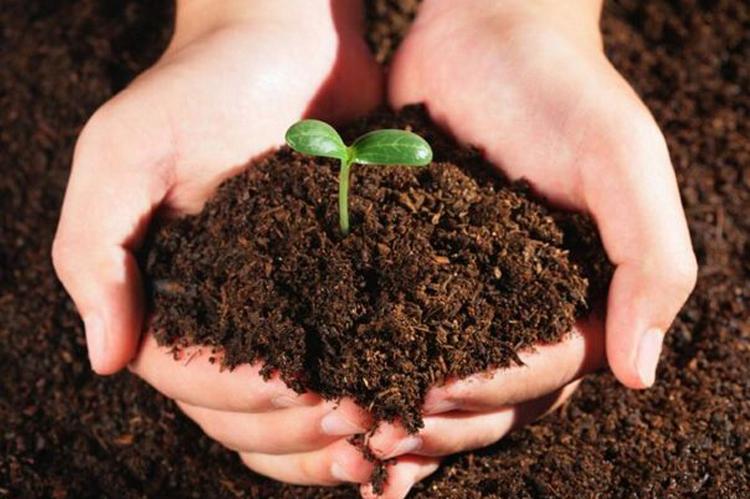 如何测定农用地土壤中的多环芳烃、多氯联苯和有机氯农药-www.biaowu.com北纳标物网
