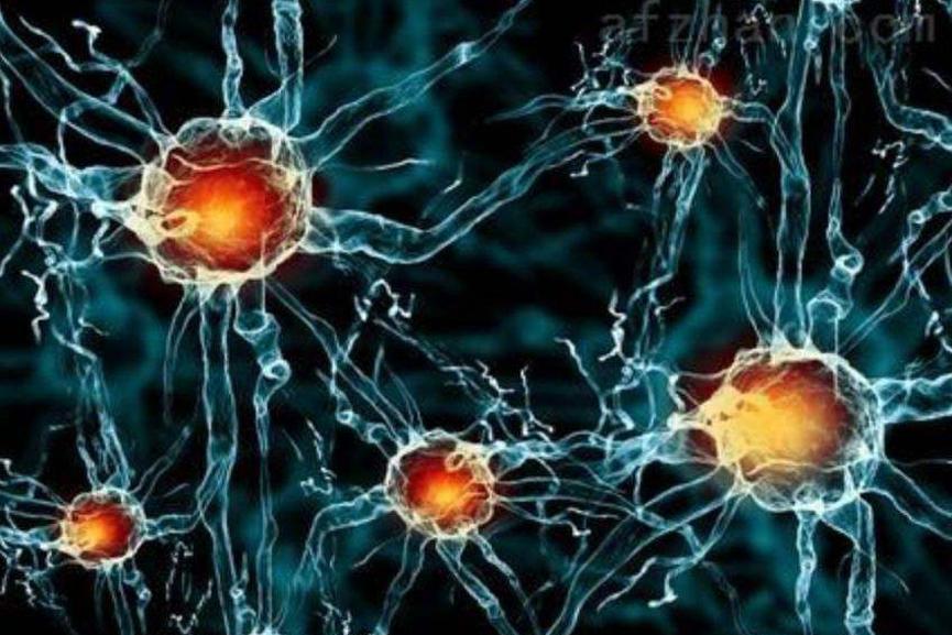 治疗慢性淋巴细胞白血病的研究进展-www.biaowu.com北纳标物网